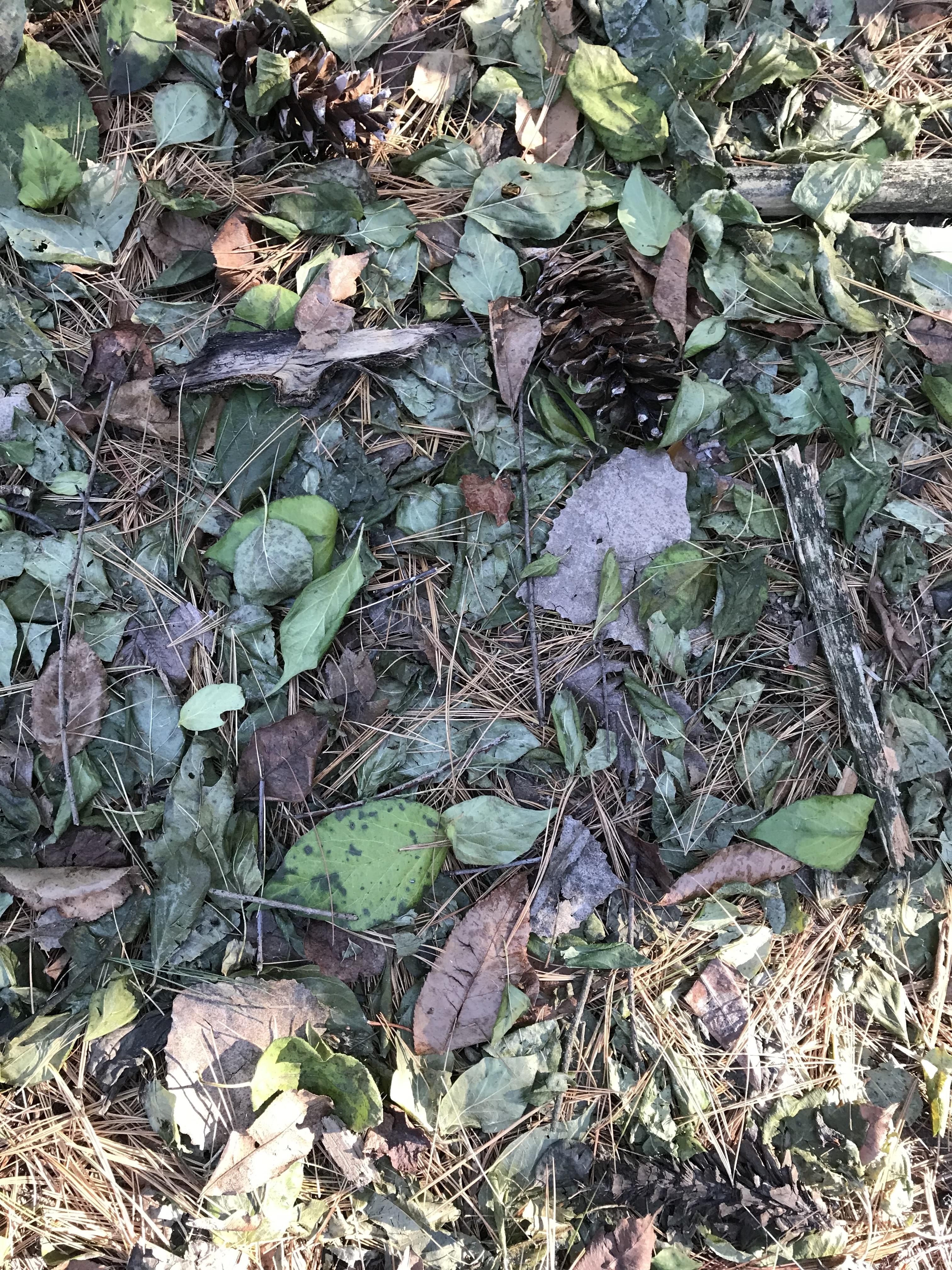 leavesongroundpic
